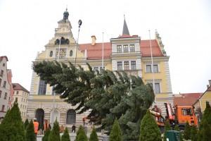 Watschnbaum