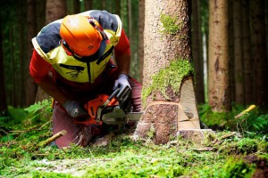 Forstarbeiter beim Baumfllen