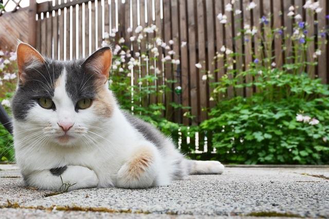 Haustiere sind die besseren Politiker?